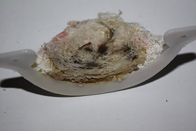img964-special-swiftlet-fake-nest-02